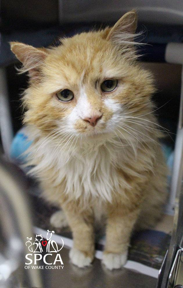 Toby, before he was adopted and was still at the SPCA of Wake County
