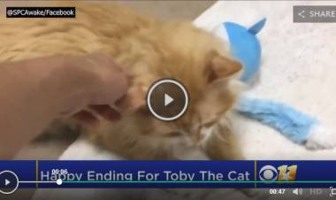 Cat Finds New Home After Walking 19 Kilometres Back To Owners Who Rejected Him