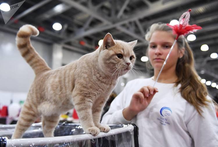 Cat club presents spectacular show